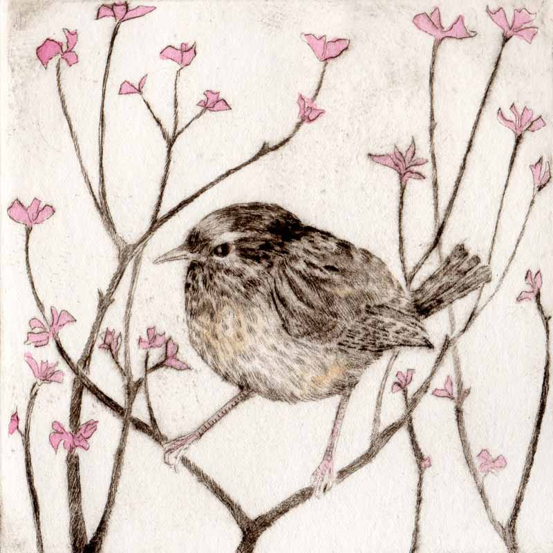 amongst the blossom print by Sarah Bays