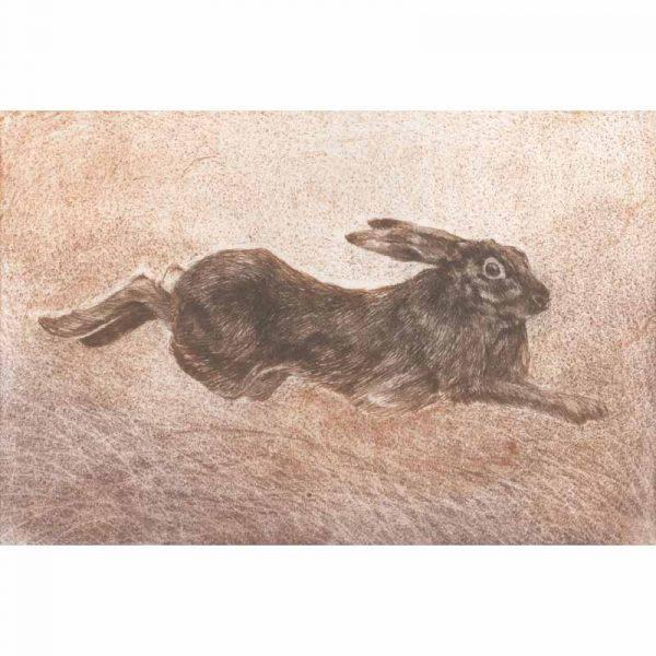 Harvest Hare print by Sarah Bays