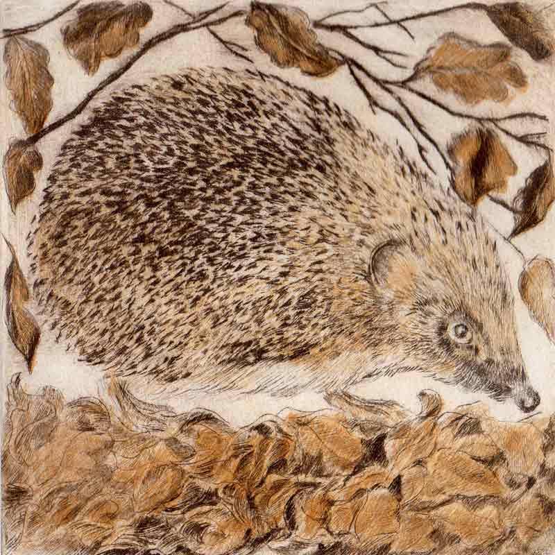Hogging the Hedge print by Sarah Bays