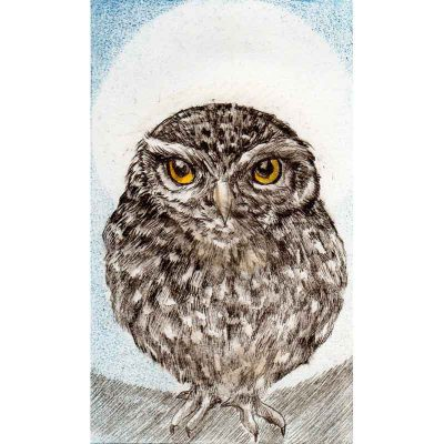 Little Owl, print by Sarah Bays