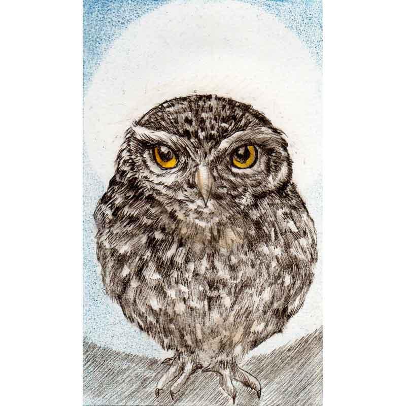 Little Owl, print by Sarah Bays