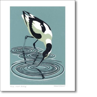 Greeting card of 'Avocet Feeding' by Robert Gillmor