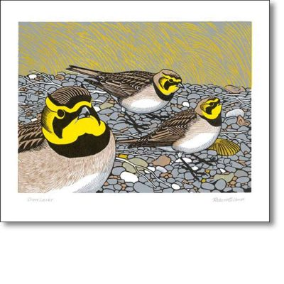 Greeting card of 'Shorelarks' by Robert Gillmor