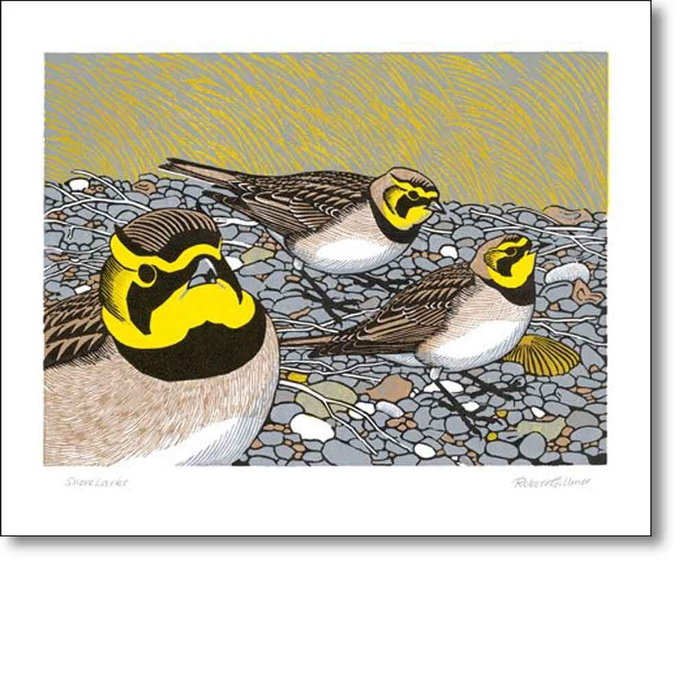 Greeting card of 'Shorelarks' by Robert Gillmor