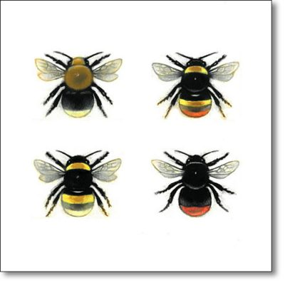 Greeting Card of 'Bumblebee Queens' by Louise Bird