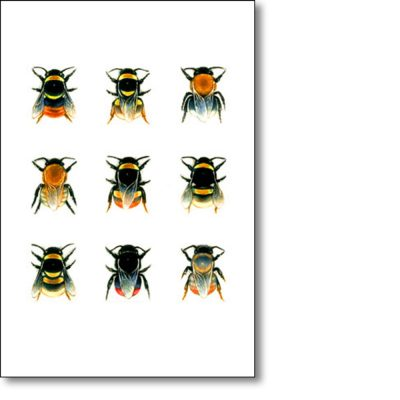 Greeting Card of 'Bumblebee Species II' by Louise Bird