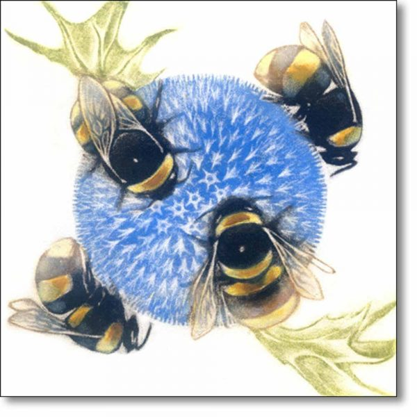 Greeting Card of 'Bumblebees on Echinops' by Louise Bird