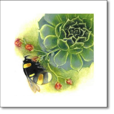 Greeting Card of 'Bumblebee on Sempervivum' by Louise Bird