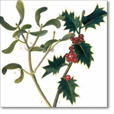 Christmas Card of 'Holly and Mistletoe'